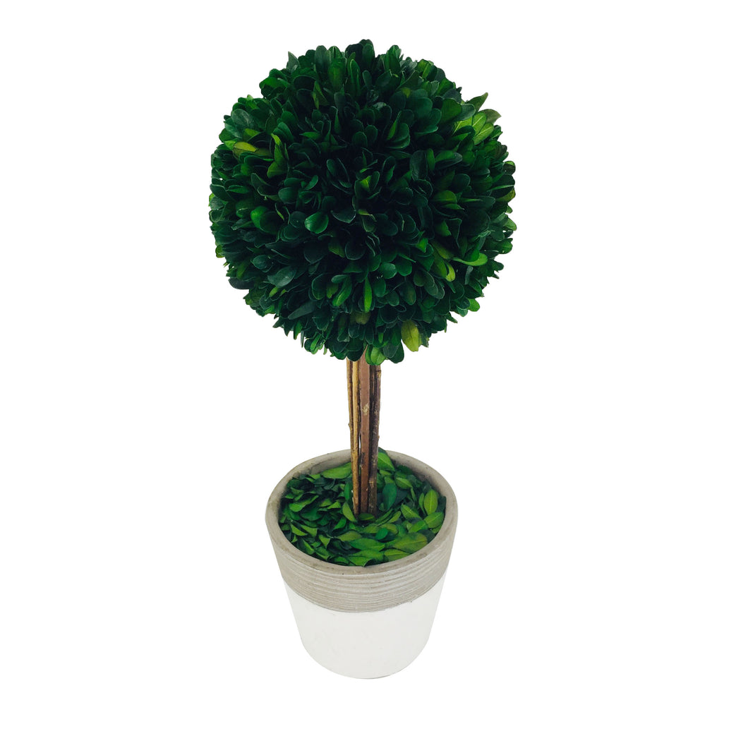 Gre Boxwood Ball W/Cement Poth14.17