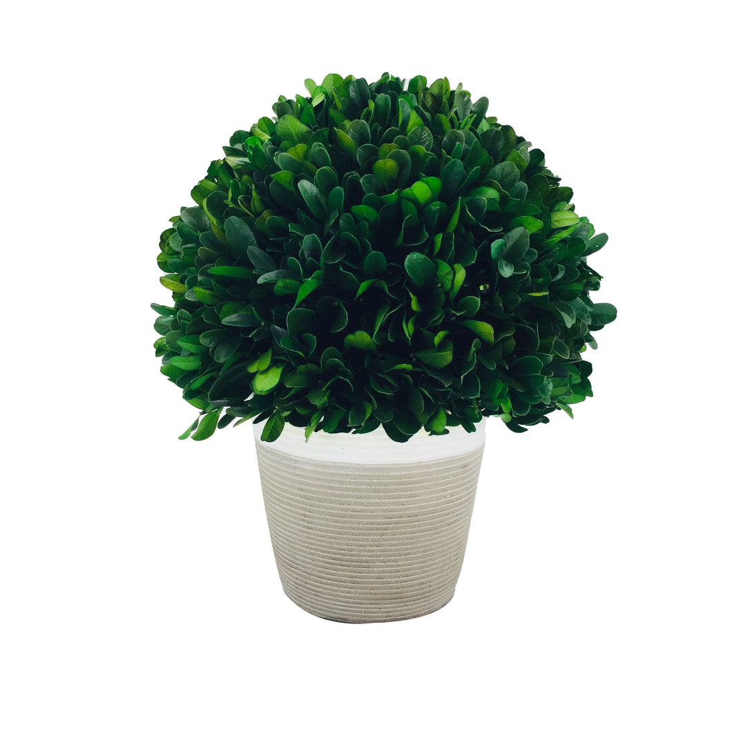 Gre Boxwood Ball W/Cement Poth9.44-9.84