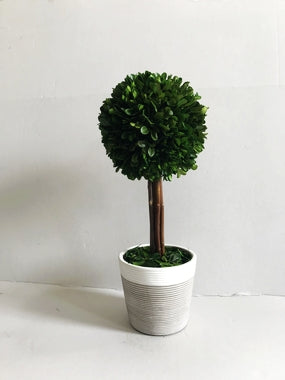 Gre Boxwood Ball W/Cement Pot