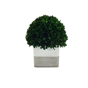 Green Boxwood Ball With Square Cement Pot