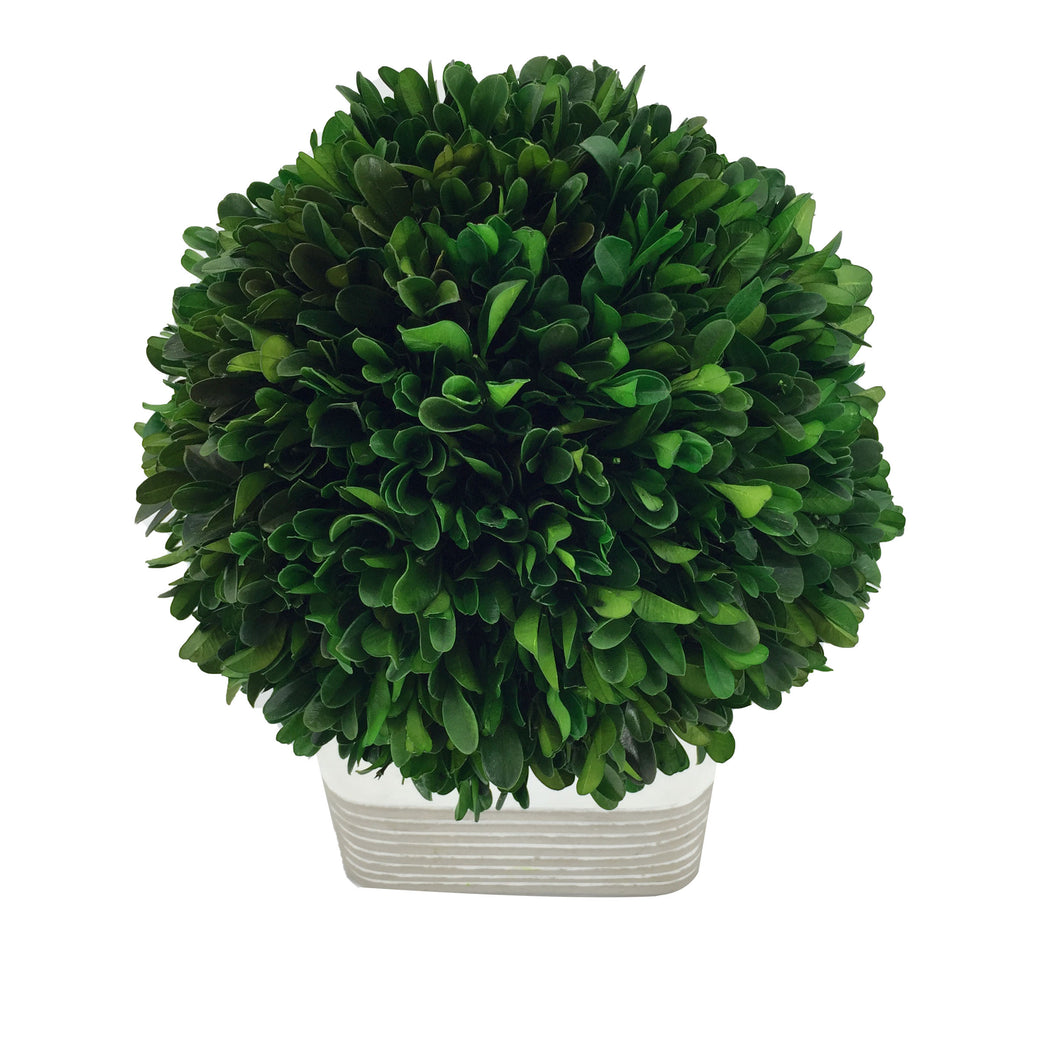 Green Boxwood Ball W/Square Cement Pot H9.44-9.84, D7.87