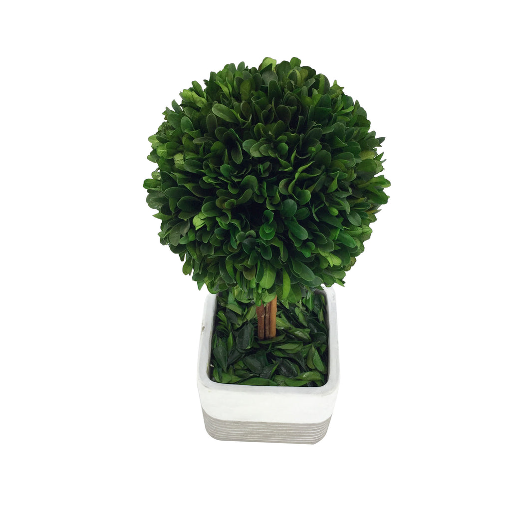 Green Boxwood Ball W/ Square Cement Poth14.17