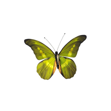 Butterfly Wall Decor - Galt International