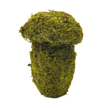 Load image into Gallery viewer, Green Mossy Mushroom