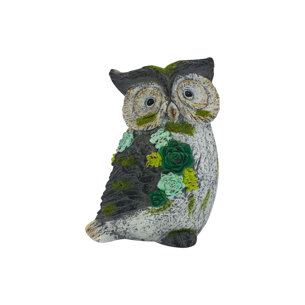 Grey Owl with Succulents