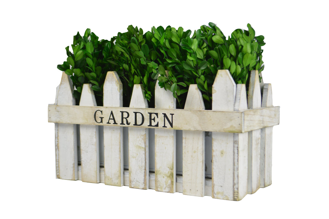 Green Boxwood In Garden Box White 13.78X5.9X9.84