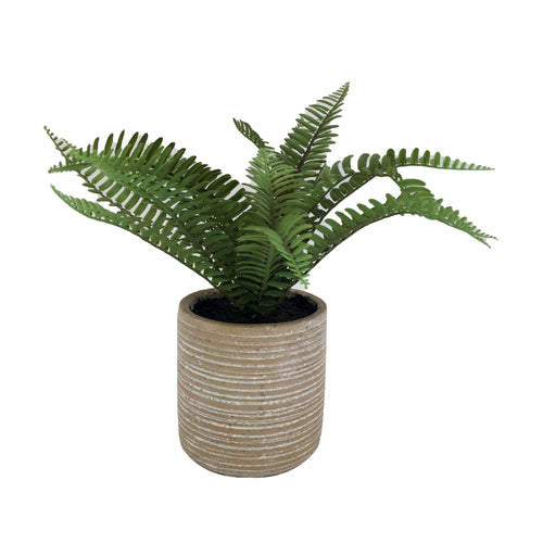 Fern With Cement Pot 12H