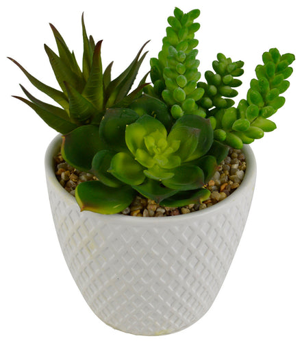 Modern Ceramic Poplar Faux Succulent in Ceramic Pot