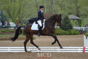 robyn fisher dressage rider and horse