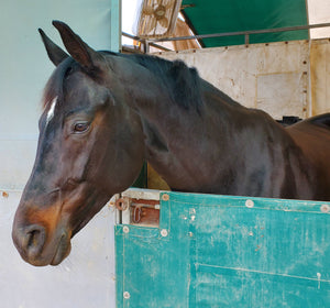 How X-Fit can help horses with Sarcoids