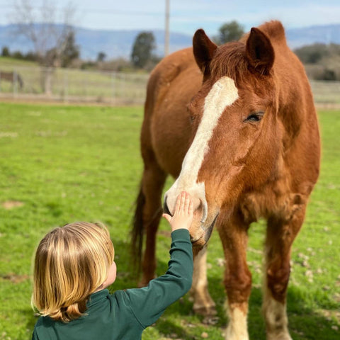 kid petting an old horse
