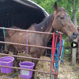 rescue horse very thin