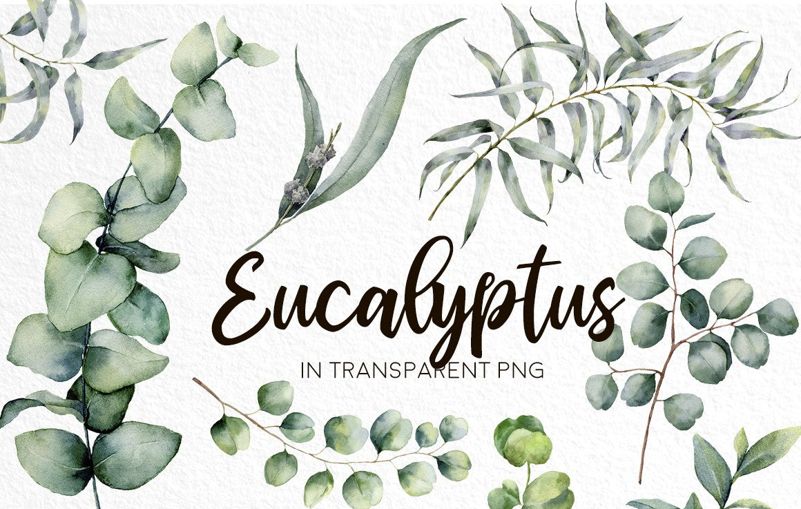 Eucalyptus Mania Watercolor Design Bundle-Graphics-Artixty