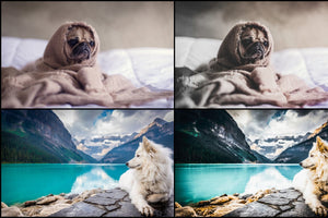 7000+ Professional Lightroom Presets-Add-Ons-Artixty