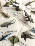 Shark Figures + Identification Cards