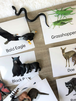 Woodland Animals Figures + Identification Cards