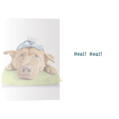 Sick As A Dog, Get Well Card