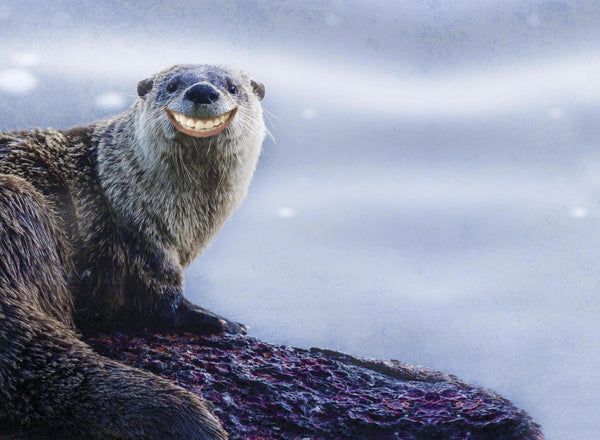 Smiling Otter, Birthday Card