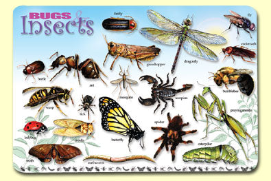 Bugs & Insects Placemat