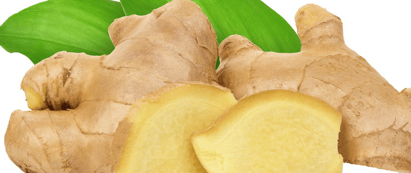 Ginger- A Mighty Herb for all Your Gut Issues