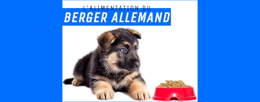 "<div style=""text-align: center;"">L' alimentation du Berger Allemand</div>"