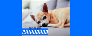 "<p style=""text-align: center;"">Le Chihuahua</p>"