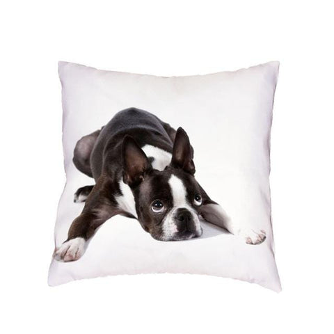 coussin boston terrier mignon