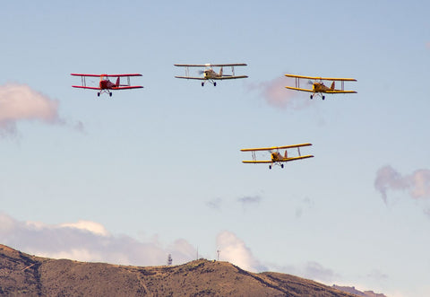 Tiger Moths - 3