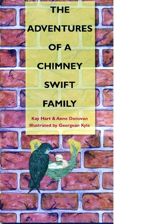 Adventures of a Chimney Swift Family!