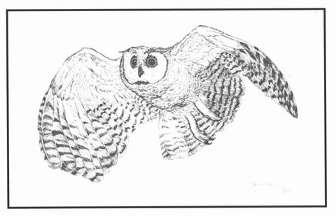 "17.  ""Long-eared Owl"" limited edition print by Georgean Z. Kyle"