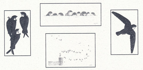 13.  Chimney Swift Note Cards