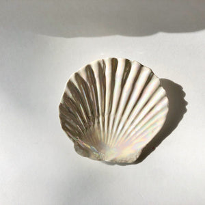 The Shell Dish
