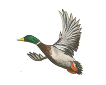 Load image into Gallery viewer, Diving Ducks