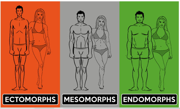 illustration of 3 different body types