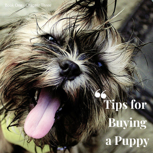 Chapter 3. Tips for buying a puppy