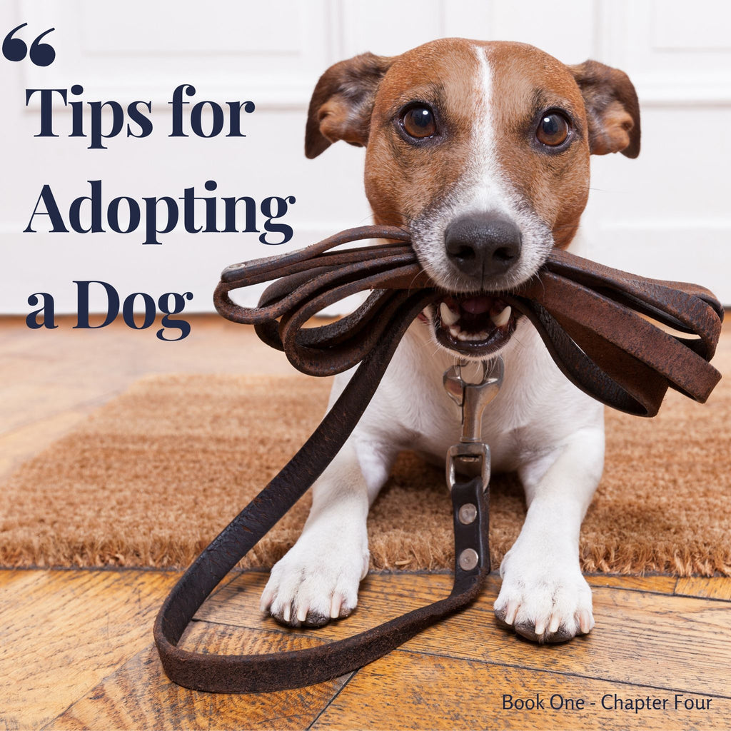 Chapter 4. Tips for adopting a dog
