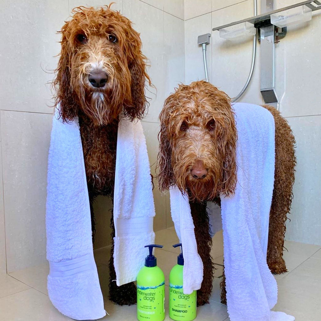 Dog Shampoo & Conditioner Combo