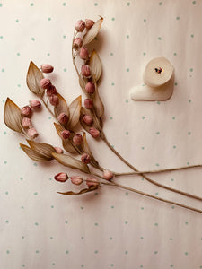 Dusty Rose Seed Pods - PARCEL