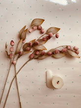 Load image into Gallery viewer, Dusty Rose Seed Pods - PARCEL