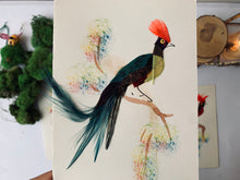 Load image into Gallery viewer, Vintage Mexican Bird Cards - PARCEL