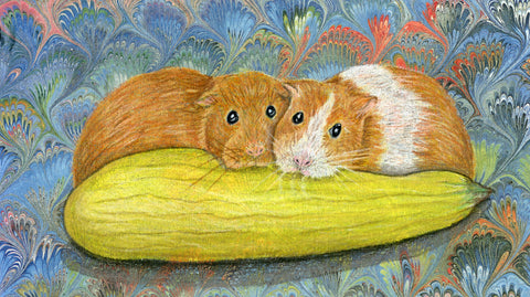 Two orange guinea pigs nibble on a summer squash