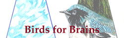 Birds for Brains