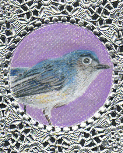 Blue Gray Gnatcatcher Greeting Card