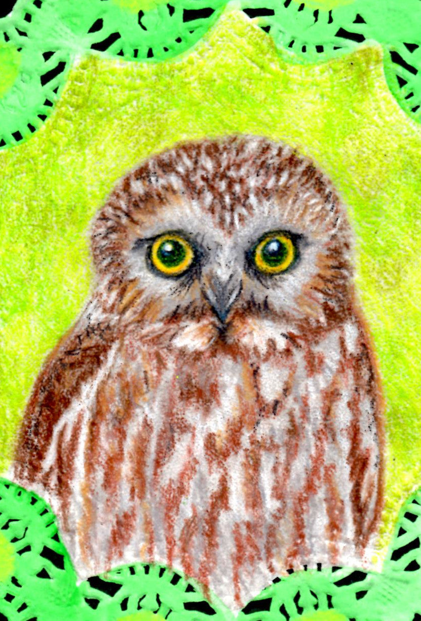 Northern Saw Whet Owl Greeting Card