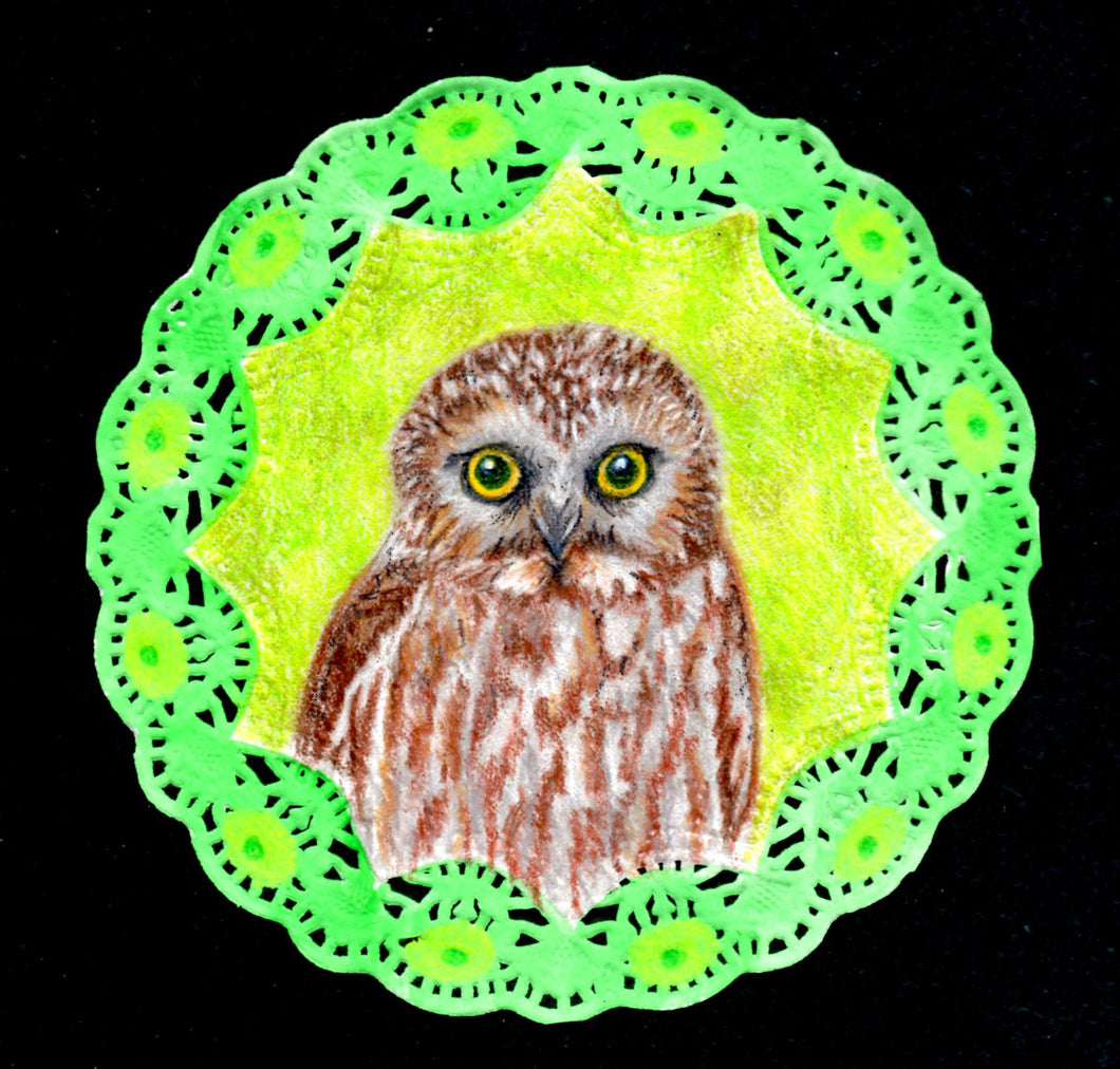 Northern Saw Whet Owl original drawing on doily