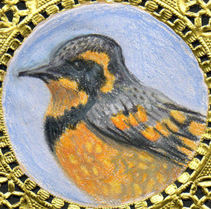Bookmark: Varied Thrush