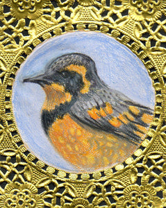 Varied Thrush Greeting Card