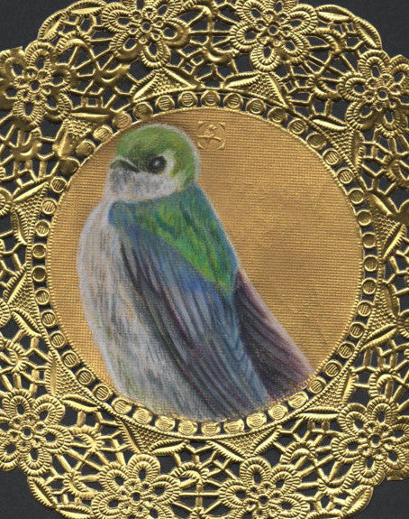 Violet Green Swallow Doily Drawing