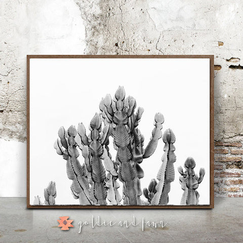 CACTUS PRINT #2-black and white by: goldie&fawn
