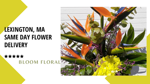 Best Same Day Flower Delivery to Lexington, MA